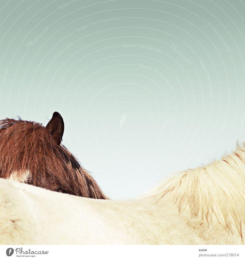 Du siehst mich nicht Himmel Natur weiß Tier Umwelt lustig braun Zusammensein außergewöhnlich wild Wildtier Schönes Wetter Rücken Pferd Fell Ohr