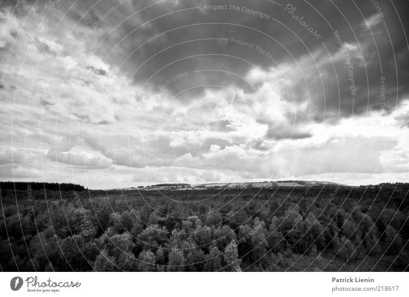 every storm is the day Himmel Natur Baum Pflanze Ferne Wald dunkel Landschaft Umwelt grau Stimmung Luft Wetter Wind Klima bedrohlich