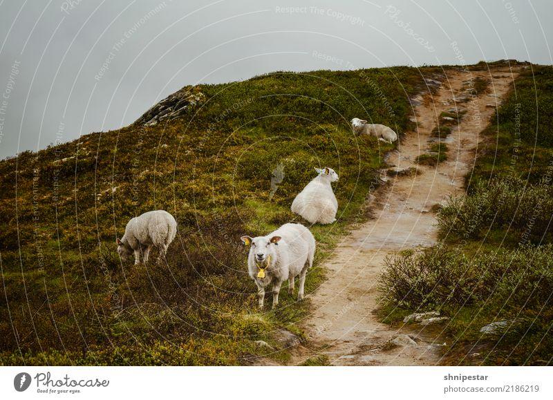 Shawn? Natur Ferien & Urlaub & Reisen Landschaft Tier Ferne Berge u. Gebirge Umwelt Gras Tourismus Ausflug wandern Europa Tiergruppe Abenteuer Sträucher Fußweg