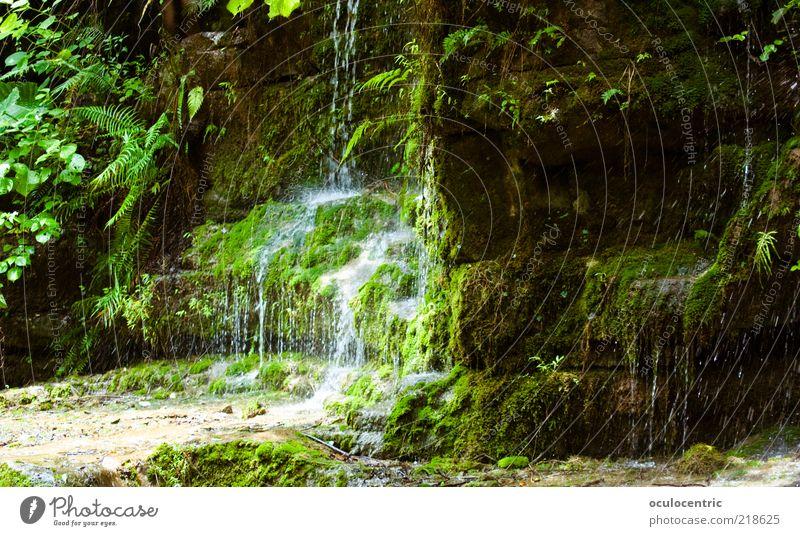 saftig Natur Wasser grün Pflanze Blatt Umwelt nass Felsen Erde Wachstum Sträucher Tropfen Asien fantastisch Unendlichkeit China