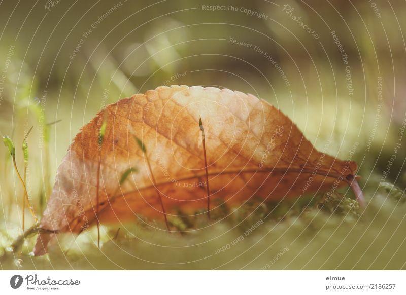 golden eye Umwelt Natur Herbst Moos Blatt Herbstlaub Park Auge Herzblatt leuchten blond hell trocken gelb Glück Lebensfreude Romantik Hoffnung Müdigkeit