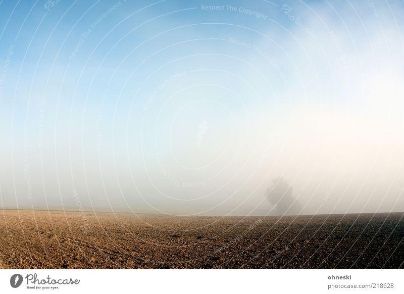 Nebel Baum Leben Herbst Landschaft Feld Wetter Hoffnung Schönes Wetter Ackerbau Blauer Himmel