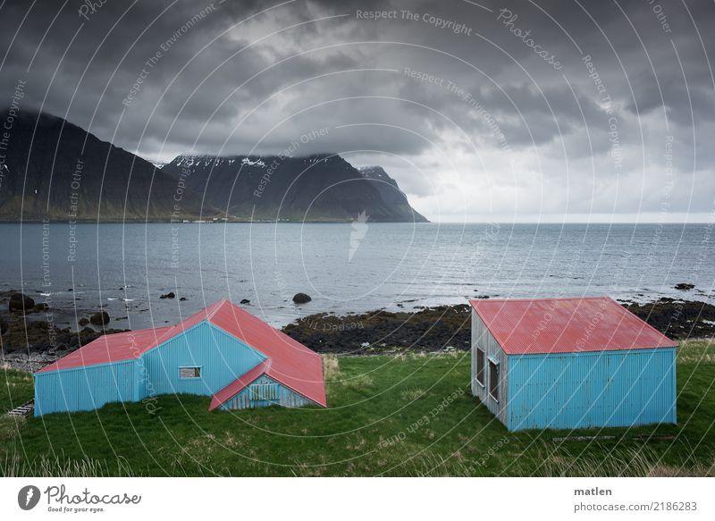 united colours of island Natur Landschaft Pflanze Horizont Frühling Wetter Wind Gras Felsen Berge u. Gebirge Schneebedeckte Gipfel Küste Strand Fjord