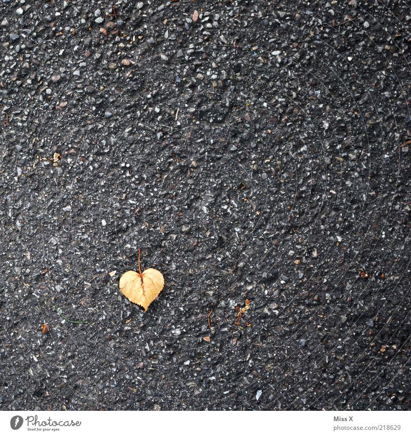 ein Herz für den Herbst Blatt Liebe klein Asphalt Teer Herbstlaub herzförmig Lindenblatt