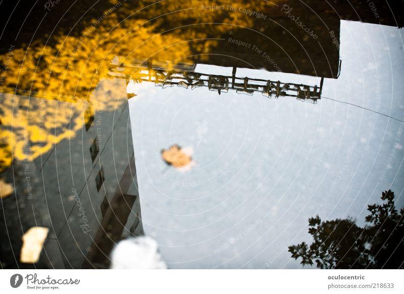 xi'an calling Umwelt kalt Asien Asphalt Xi'an China Pfütze Chinesisch Himmel Herbst Blatt Baum Wasser ungemütlich Unschärfe Farbfoto Gedeckte Farben Experiment