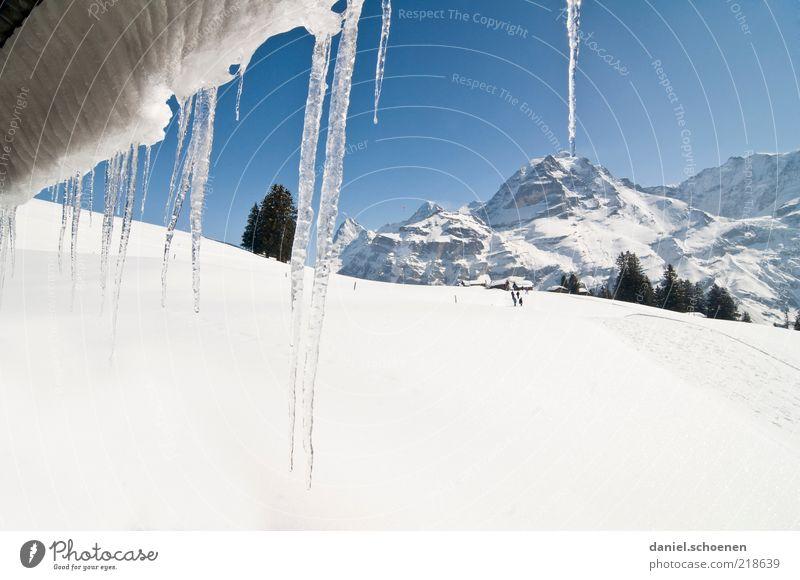 ...und so sieht er aus, der Winter ! weiß Baum blau Ferien & Urlaub & Reisen Schnee Berge u. Gebirge Landschaft Eis hell Frost Tourismus Klima Schweiz Alpen