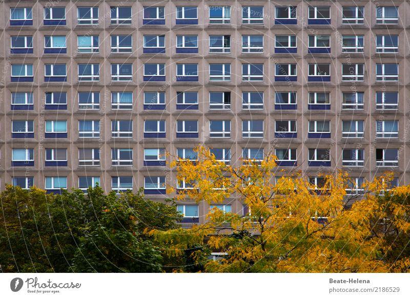 Farbtupfer Häusliches Leben Wohnung Umwelt Herbst Pflanze Baum Sträucher Park Berlin Hochhaus Bauwerk Gebäude Architektur Fassade Fenster Stadt braun gelb grün