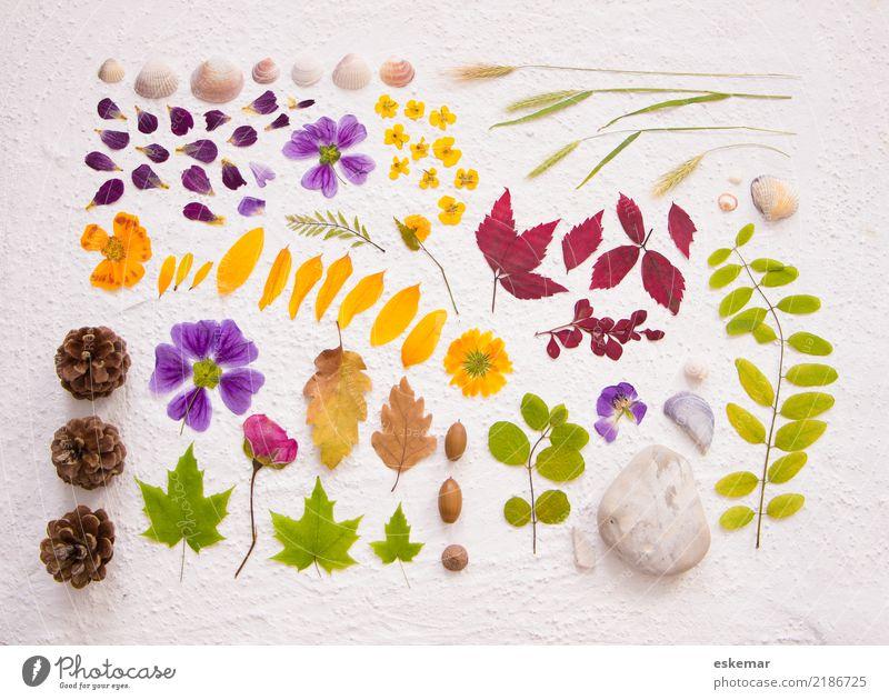 Natur Fundstücke Herbst Pflanze Blume Gras Rose Blatt Blüte Grünpflanze Wildpflanze Tannenzapfen Eicheln Sumpf-Dotterblumen Muschel Dekoration & Verzierung