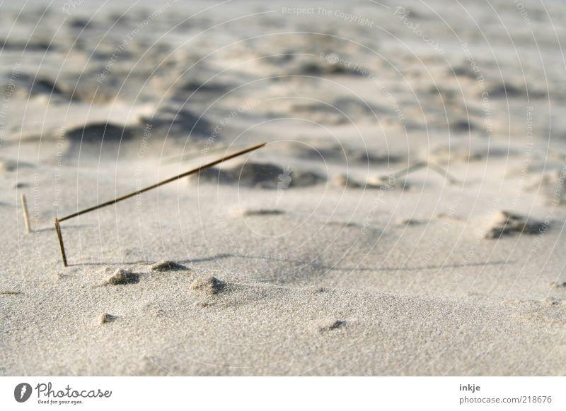 last Halm standing Natur Sommer Strand ruhig Erholung Leben grau Sand braun Nordsee rein Wohlgefühl harmonisch