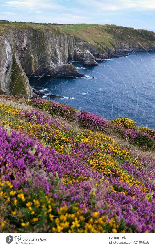 Blumenwiese an tödlichem Abgrund Umwelt Natur Landschaft Pflanze Urelemente Erde Wasser Himmel Wolken Sommer Schönes Wetter Gras Sträucher Moos Hügel Felsen