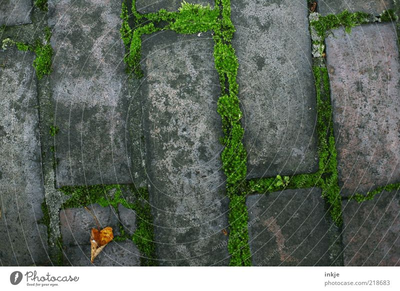 Herbst auf dem Bordstein alt grün Blatt grau Wege & Pfade Stein braun Hintergrundbild dreckig trist trocken Backstein Bürgersteig Moos Fuge Pflastersteine