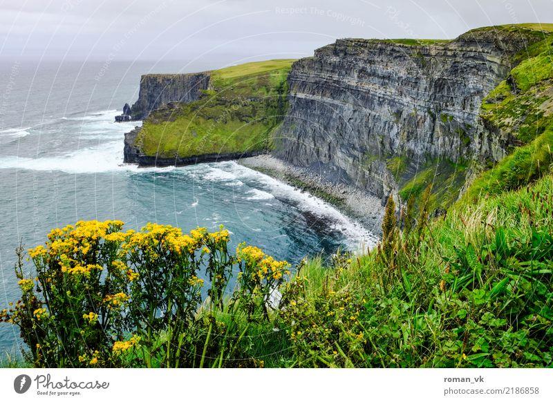 Keinen Schritt weiter! Umwelt Natur Landschaft Pflanze Urelemente Erde Sommer Felsen Schlucht Küste Meer alt ästhetisch bedrohlich Nordirland Klippe steil