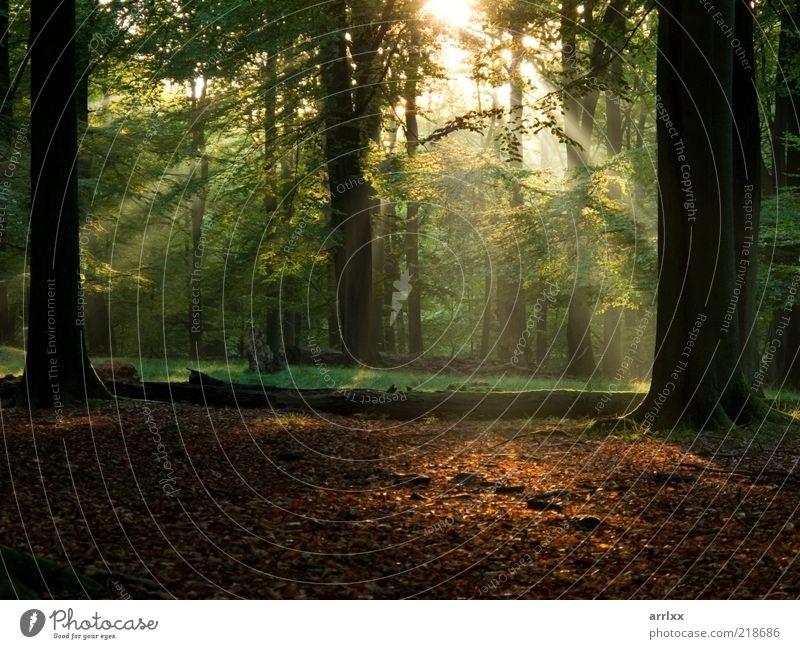 Feenschwanzwald schön Sonne Umwelt Natur Landschaft Herbst Schönes Wetter Nebel Baum Park Wald Wege & Pfade natürlich grün Fröhlichkeit selbstbewußt Macht