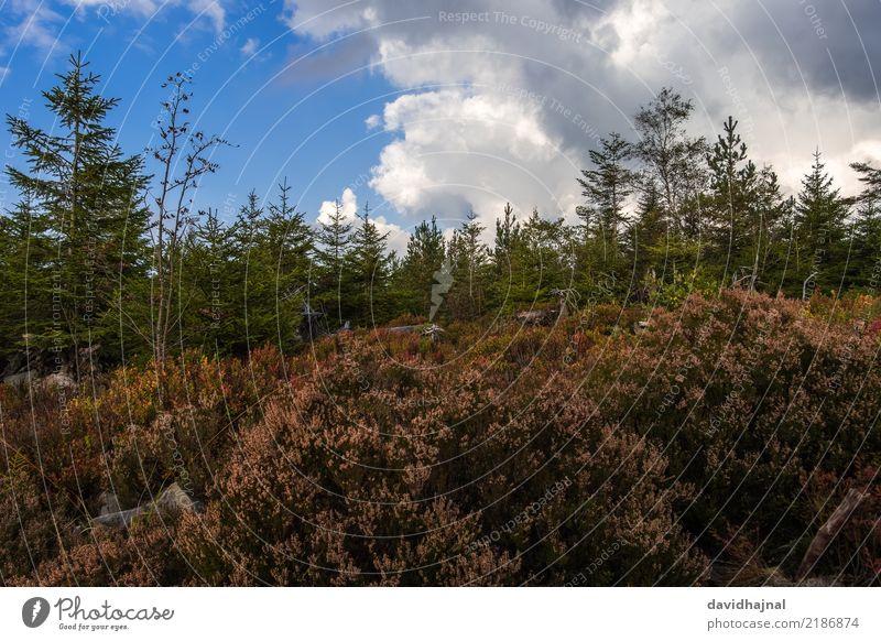 Nordschwarzwald Ferien & Urlaub & Reisen Tourismus Ausflug Expedition wandern Sport Umwelt Natur Landschaft Herbst Pflanze Baum Wald Hügel Berge u. Gebirge