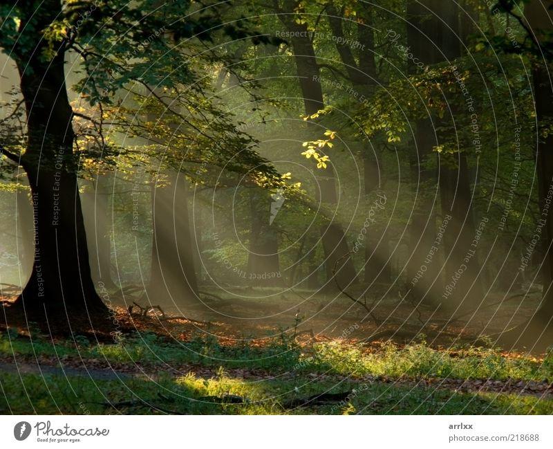 Natur grün schön Farbe Sonne Baum Landschaft Wald Umwelt gelb Herbst Gefühle Wege & Pfade natürlich Hintergrundbild außergewöhnlich