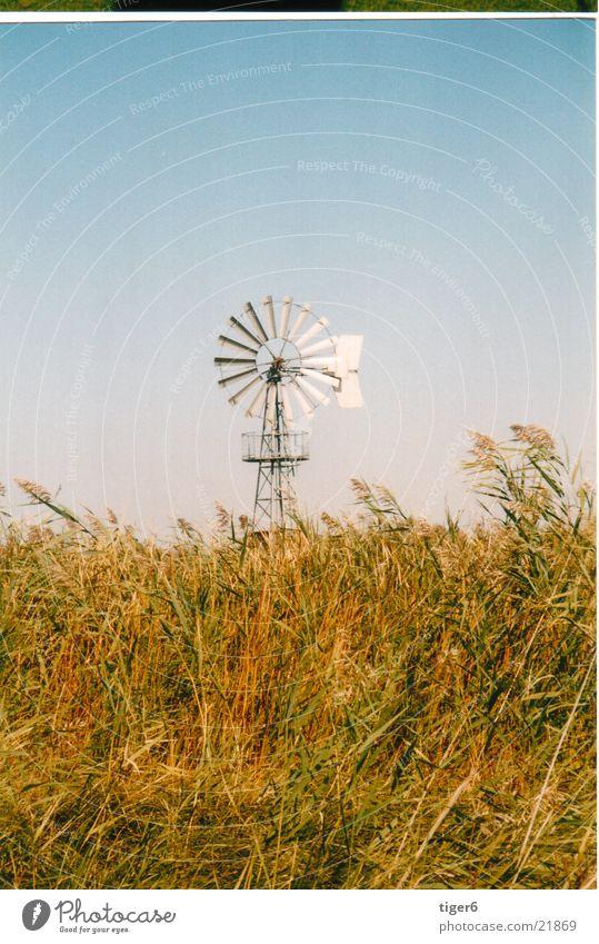 Windmühle in der Puszta Mühle Industrie Schilff Energiewirtschaft Wetter