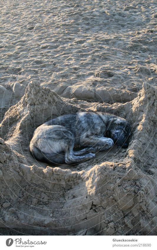 My Home Is My Castle Sommer Strand Ferien & Urlaub & Reisen ruhig Tier Erholung träumen Hund Zufriedenheit braun lustig schlafen Sicherheit Pause einzigartig
