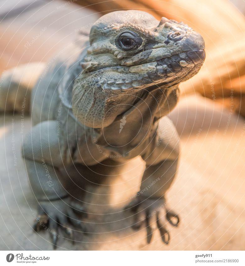 Was guggst Du... :-) Erde Frühling Sommer Wüste Tier Wildtier Tiergesicht Schuppen Krallen Pfote Fährte Zoo Echsen Echsenauge 1 beobachten entdecken