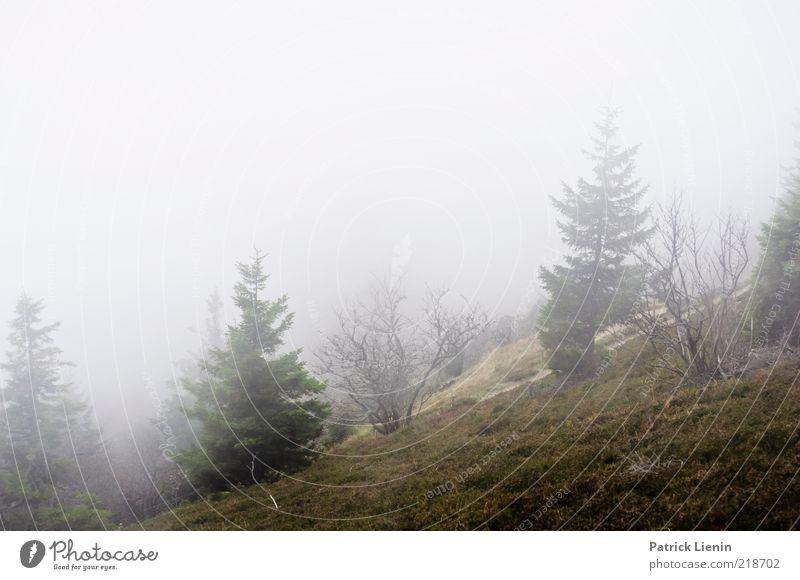trübe Aussichten Natur Baum Pflanze Wolken Wald dunkel kalt Erholung Wiese Herbst Berge u. Gebirge Landschaft Luft Stimmung Nebel Umwelt