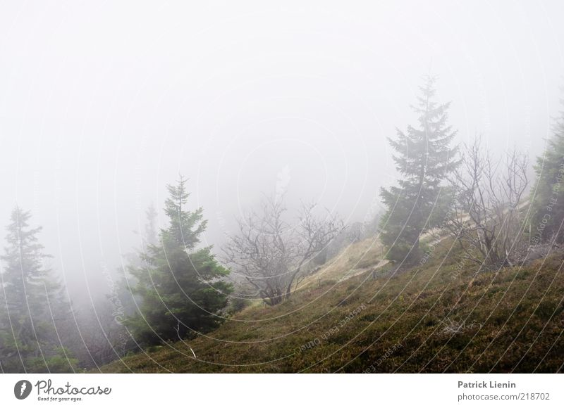 trübe Aussichten Umwelt Natur Landschaft Pflanze Urelemente Luft Wassertropfen Wolken Herbst Nebel Baum Wald Hügel Berge u. Gebirge Schwarzwald beobachten