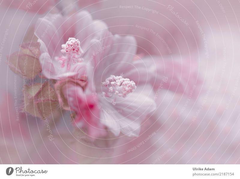 Hibiskus elegant Stil Design Wellness harmonisch Wohlgefühl Zufriedenheit Erholung ruhig Meditation Dekoration & Verzierung Tapete Bild Poster Hochzeit Natur