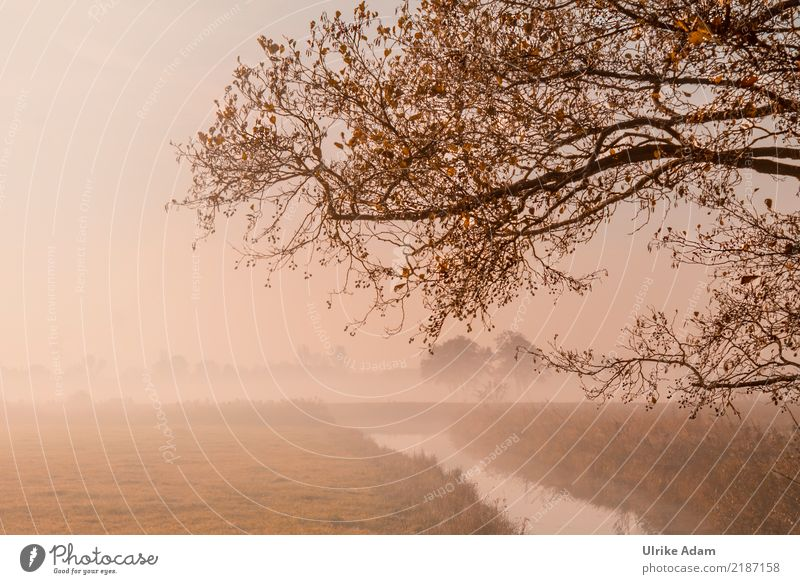 Herbstnebel im Teufelsmoor Natur Landschaft Pflanze Nebel Baum Blatt Zweig Ast herbstlich Herbstfärbung Gold Flussufer Moor Sumpf ruhig Trauer Einsamkeit