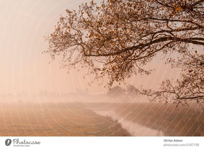 Herbstnebel im Teufelsmoor Natur Pflanze Baum Landschaft Einsamkeit Blatt ruhig Nebel gold Gold Ast Trauer Zweig Flussufer Dunst