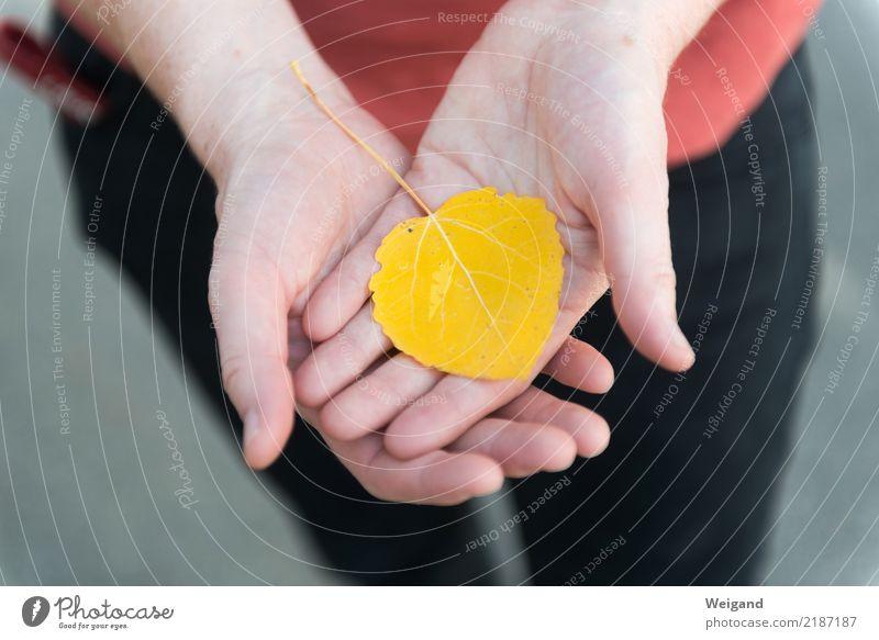 Safran Junge Frau Jugendliche Erwachsene Hand 1 Mensch Natur fallen frei Freundlichkeit Fröhlichkeit gelb gold rot Güte Menschlichkeit Solidarität