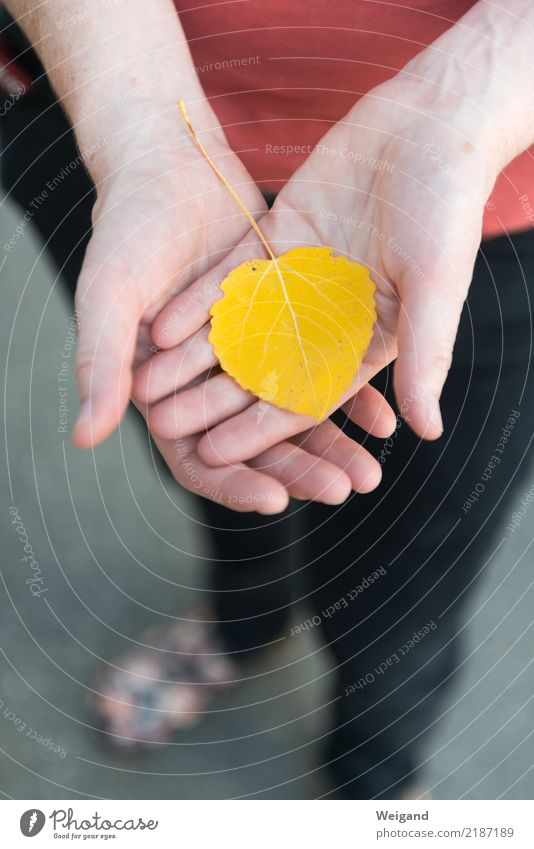 Goldstück Leben harmonisch Wohlgefühl Zufriedenheit Sinnesorgane Erholung ruhig Meditation feminin Frau Erwachsene Freundschaft Hand 1 Mensch atmen frisch