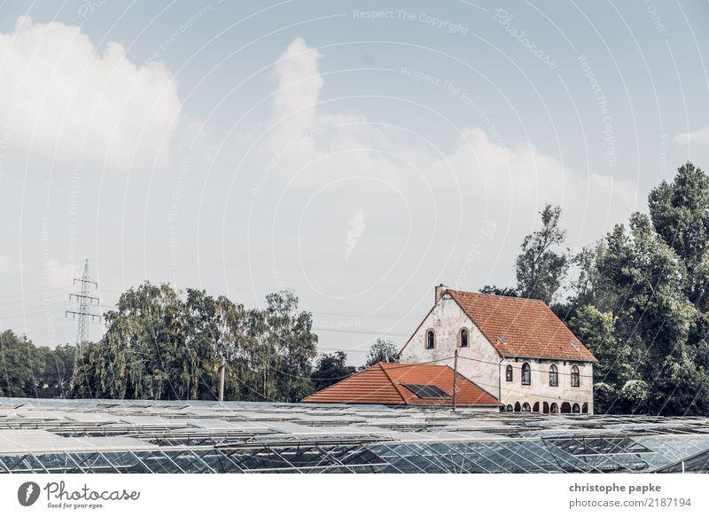 Traum vom Haus mit Potential Himmel alt Baum Wolken Gebäude Fassade Schönes Wetter Stadtrand Düsseldorf