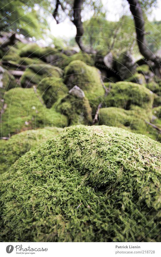 Mooslandschaft Umwelt Natur Landschaft Pflanze Sommer Wald Hügel Stein bewachsen grün schön Farbfoto Außenaufnahme Nahaufnahme Menschenleer Tag Unschärfe