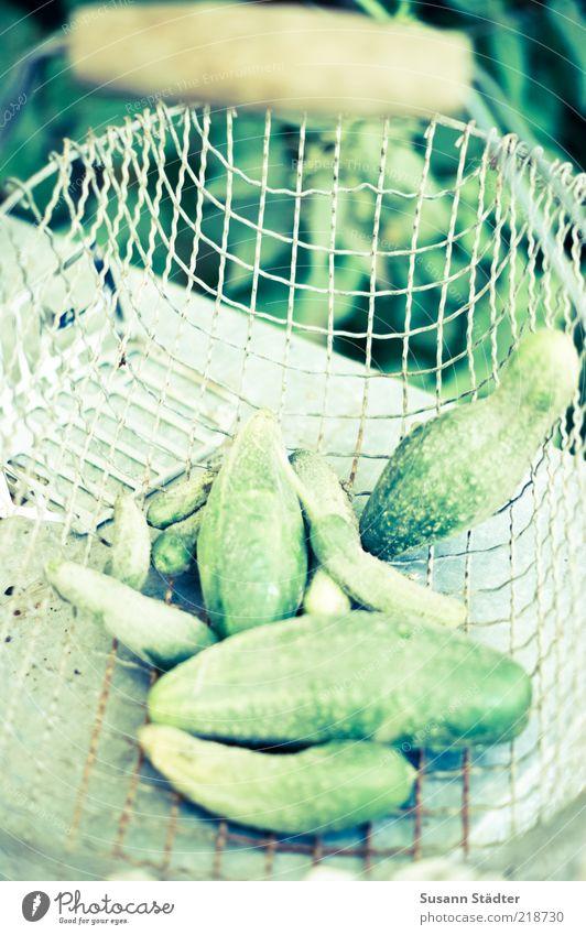 Gürkchen grün Lebensmittel frisch Gemüse Ernte Griff Bioprodukte Korb biologisch Vegetarische Ernährung Gurke Gesunde Ernährung Einkaufskorb Vegane Ernährung