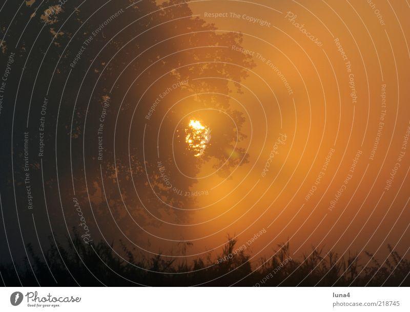 Sonnenstrahlen Umwelt Natur Landschaft Sonnenaufgang Sonnenuntergang Sonnenlicht Herbst Wetter Nebel Baum Stimmung ruhig Morgennebel Herbstnebel Farbfoto