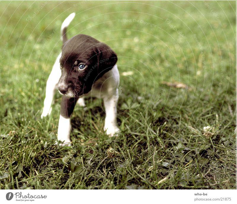 schau_doch_mal_skeptisch Hund Tier Welpe Haustier