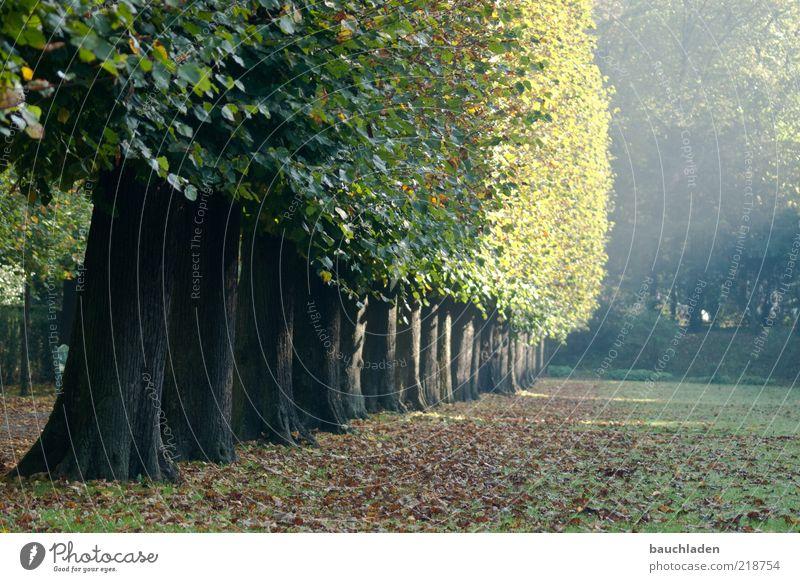 Herbstmorgen Natur Pflanze Sonnenlicht Baum Park braun grün Farbfoto Außenaufnahme Menschenleer Textfreiraum rechts Textfreiraum unten Morgen Licht