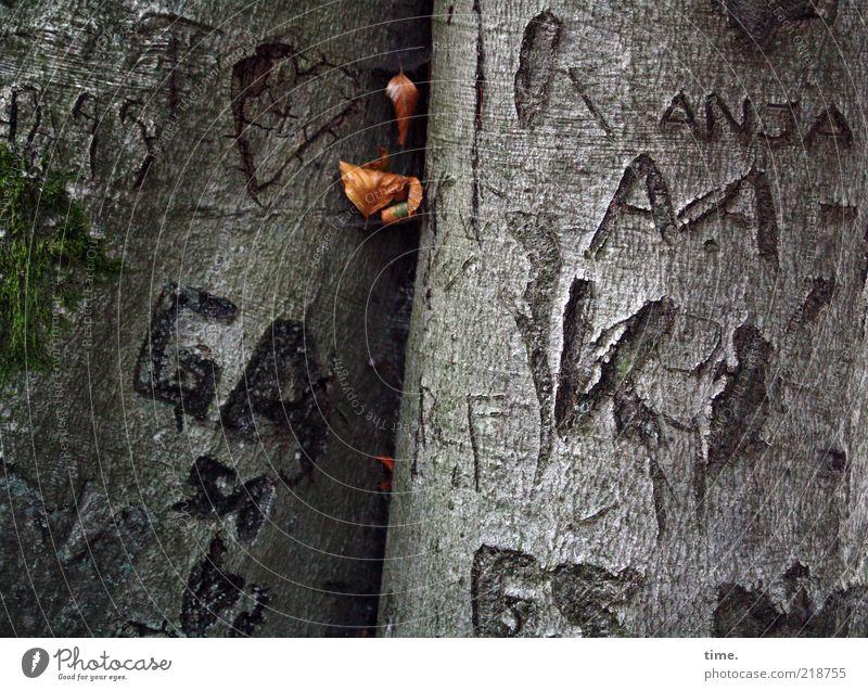 Tattooed Trees Natur Baum grün Pflanze Blatt grau Herz Umwelt Schriftzeichen Buchstaben Baumstamm Erinnerung Baumrinde zerstören Narrenhände