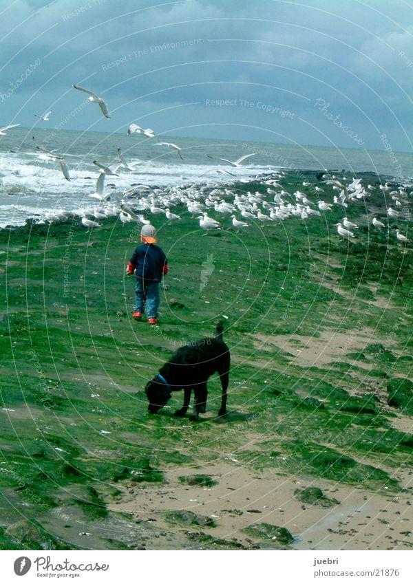 Kind und Hund beobachten Möwen Mann Wasser Himmel Meer Suche Nordsee Niederlande