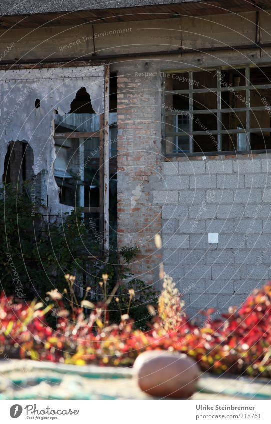 Zerfall Haus Fabrik Pflanze Ruine Mauer Wand alt kaputt trist Verfall Vergangenheit Altbau Gitter schäbig gebrochen verfallen Chioggia Venedig Bruchbude