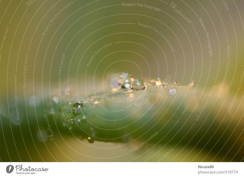 Drops III Wasser grün Pflanze Blatt Erholung glänzend nass Wassertropfen ästhetisch nah zart natürlich feucht Tau positiv exotisch