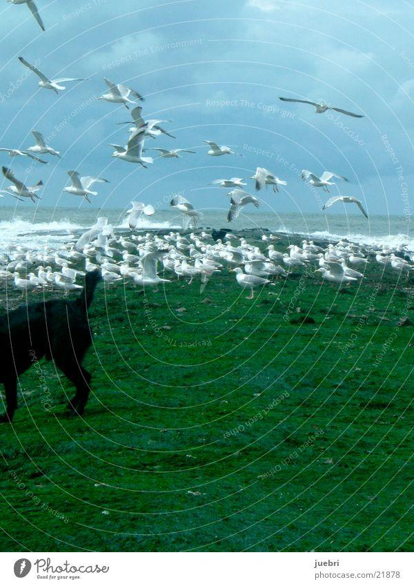 Möwen und Hund Wasser Himmel Hund Möwe Nordsee erschrecken