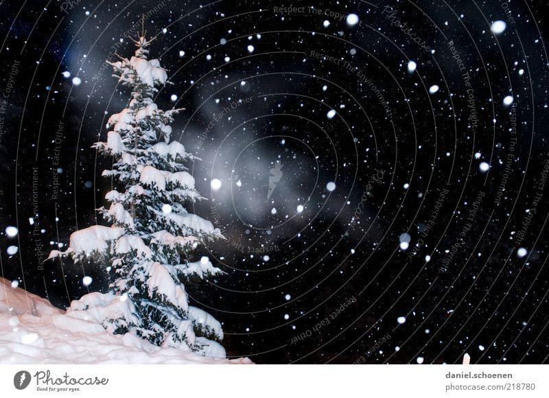 ...leise rieselt ... Ferien & Urlaub & Reisen Winter Schnee Winterurlaub Natur Klima Eis Frost Schneefall schwarz weiß Tanne Nacht Blitzlichtaufnahme Licht