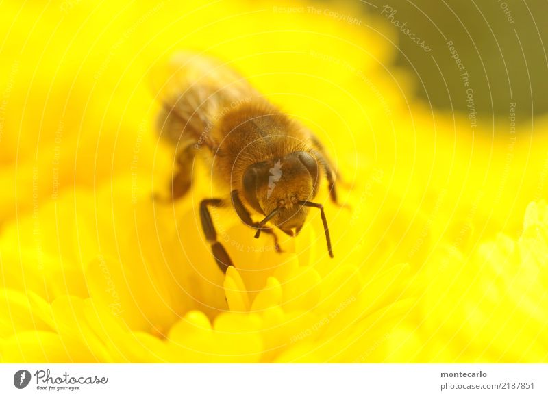 Da fehlt doch was? Umwelt Natur Pflanze Blume Blüte Grünpflanze Wildpflanze Tier Nutztier Wildtier Biene 1 authentisch kaputt klein Krankheit nah natürlich wild