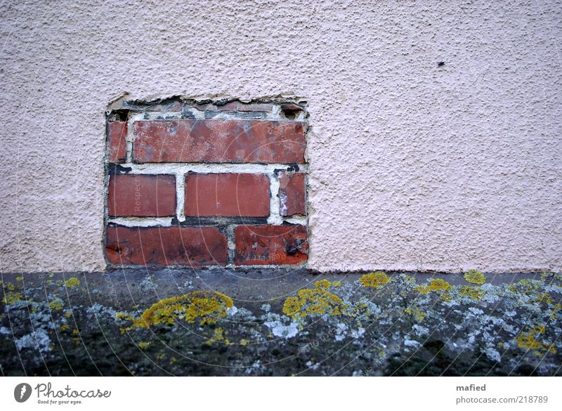 Backstein alt grün rot schwarz Haus Wand grau Mauer rosa Schilder & Markierungen Fassade Moos Putz Fuge fehlen