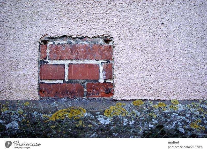 Backstein Haus Moos Mauer Wand Fassade Schilder & Markierungen grau grün rosa rot schwarz Putz Sockel Flechten Farbfoto Außenaufnahme Menschenleer