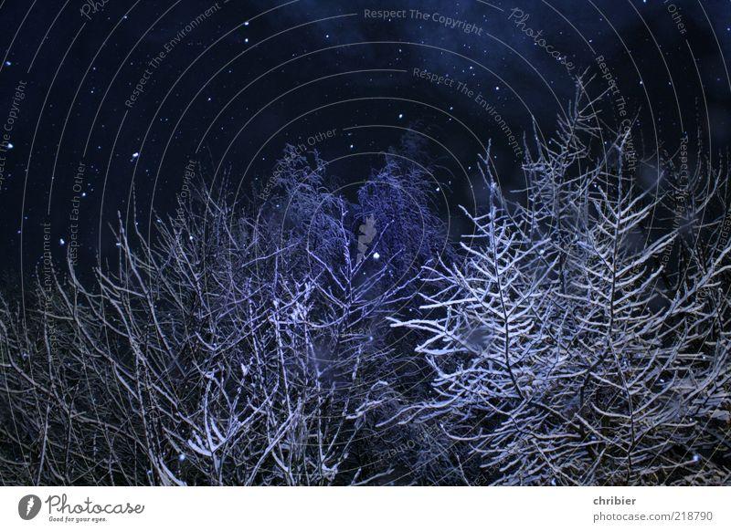 Winterweihnachtswunderwald Schnee Winterurlaub Natur Eis Frost Schneefall Baum Wald fallen glänzend schön blau weiß Vorfreude ruhig einzigartig Winterstimmung