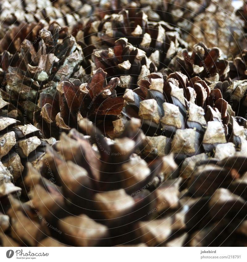 Kuschelgruppe Herbst Holz klein Spitze braun schwarz Zapfen Kiefer Dekoration & Verzierung Weihnachtsdekoration Farbfoto Außenaufnahme Menschenleer Tag viele