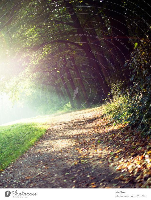weils so schön ist ... Natur Baum Pflanze Wald Erholung Herbst Gras Umwelt Sträucher Spaziergang Wege & Pfade Fußweg Schönes Wetter Herbstlaub Spazierweg