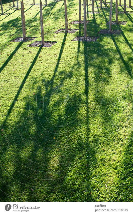 zählaufgabe Natur Baum ruhig Wiese Umwelt Wachstum Schönes Wetter