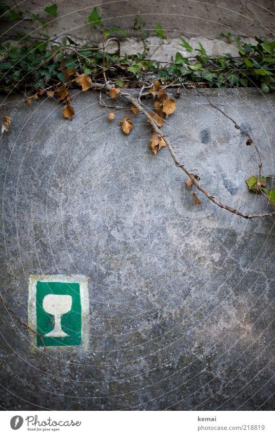 Auf dem richtigen Weg weiß grün Pflanze Blatt Wand Mauer Glas Schilder & Markierungen Wein Zeichen Symbole & Metaphern Fußweg Wegweiser Efeu Piktogramm