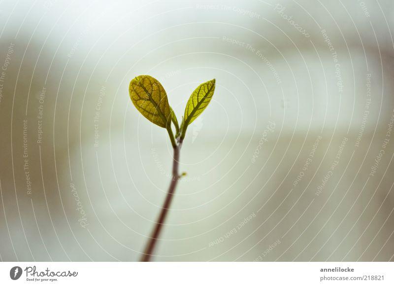 Wachstum Natur Baum grün Pflanze Blatt Frühling klein Umwelt frisch Wachstum natürlich exotisch Trieb Grünpflanze Keim Frühlingsgefühle